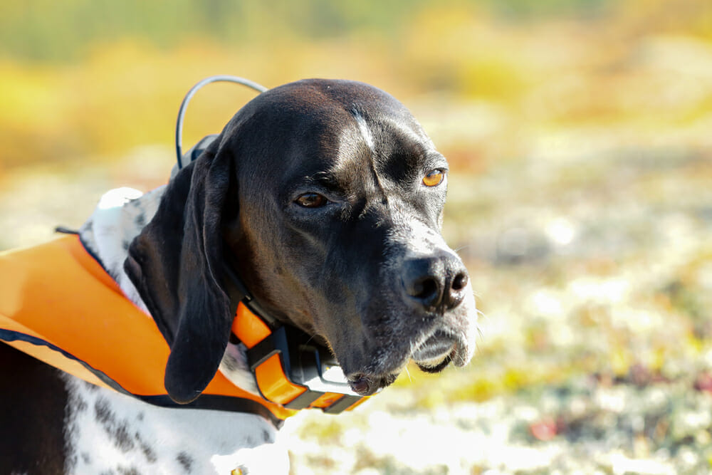 6 Must to Have Tools & Gadgets for Pet Owners