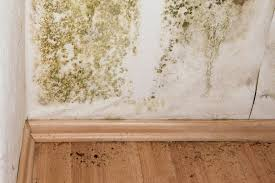 What To Do When You Find Mold in Your Home